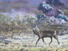 BREAKING COVER, RED DEER STAG