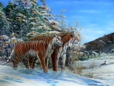 AMUR TIGERS CROSSING PATHS