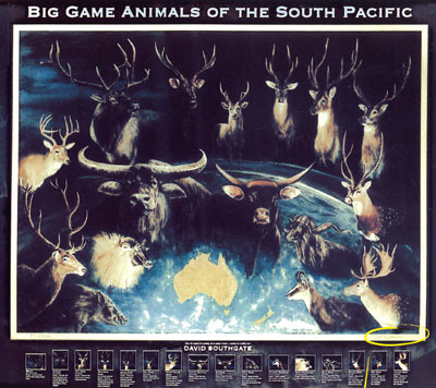 Big Game Animals - Limited Edition Prints